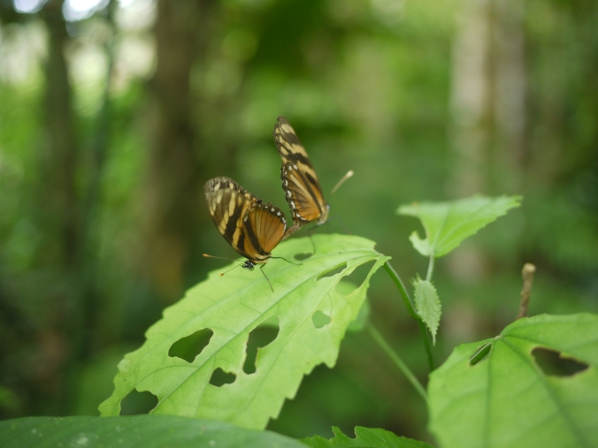 Mariposas amorosas.